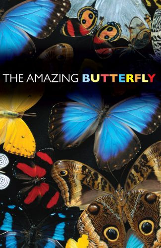 The Amazing Butterfly  - Pamphlet
